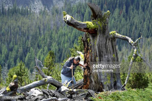 Confederated Salish and Kootenai Tribes Preservation Office Program Manager Mike Durglo Jr greets what remains of a 2000yearold whitebark pine tree...