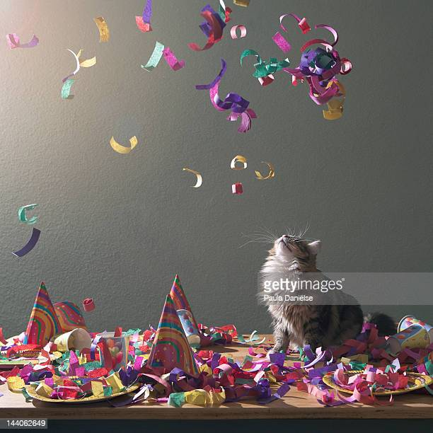 Confetti with cat on table