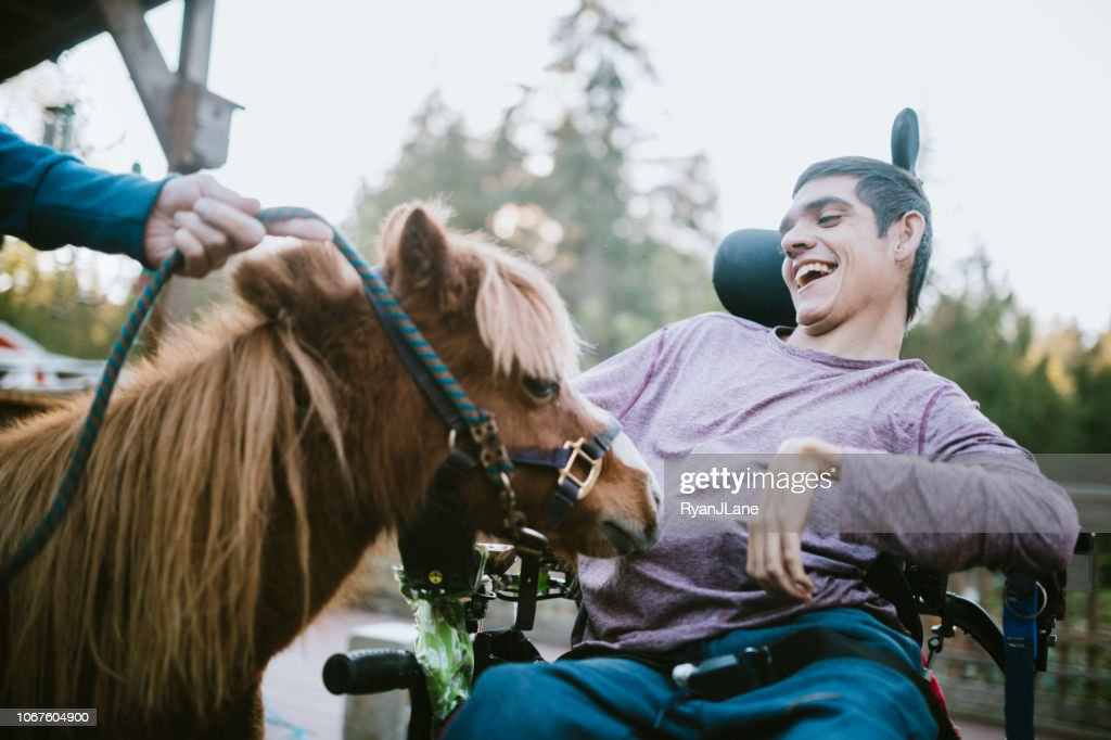 Confident Young Man In Wheelchair Visits Therapy Horse : Stock Photo