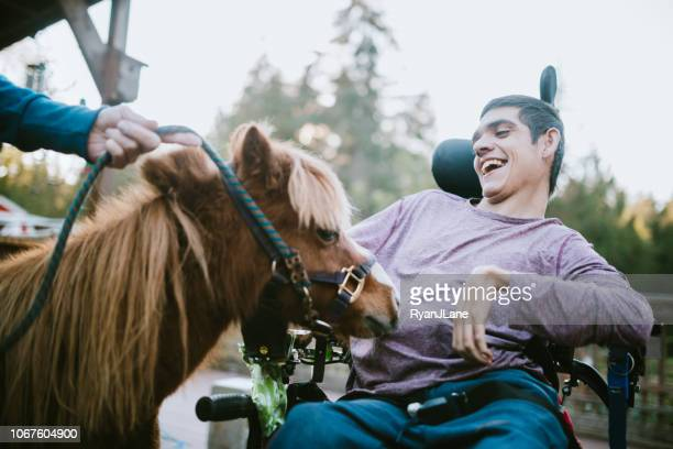 confident young man in wheelchair visits therapy horse - horse stock pictures, royalty-free photos & images