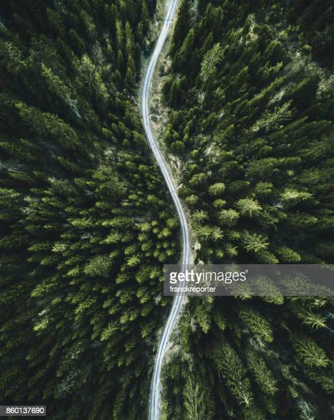 confirous tree forest aerial view in north america - thoroughfare stock photos and pictures