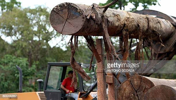 Confiscated logs are downloaded from a lorry in a port on the banks of the Moju River port 40 Km from Tailandia Para northen Brazil on February 27...
