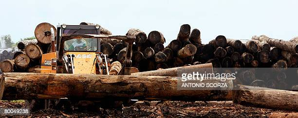 Confiscated logs are moved at a clandestine sawmill on the outskirts of Tailandia in the northern Brazilian state of Para on February 28 2008 as part...