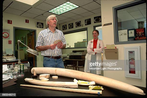 Confiscated tusks are held at a forensics laboratory of the US Fish and Wildlife Service Ashland Oregon