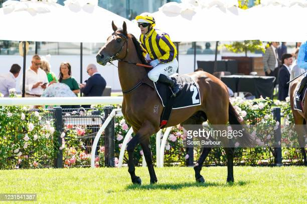 Confrontational ridden by Noel Callow heads to the barrier before the 2021 Lexus Melbourne Cup Tour at Flemington Racecourse on March 06, 2021 in...