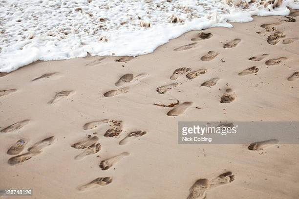 confused footsteps in the sand - temporary stock pictures, royalty-free photos & images