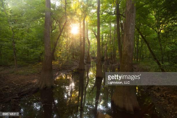 Congaree National Park near Columbia, South Carolina