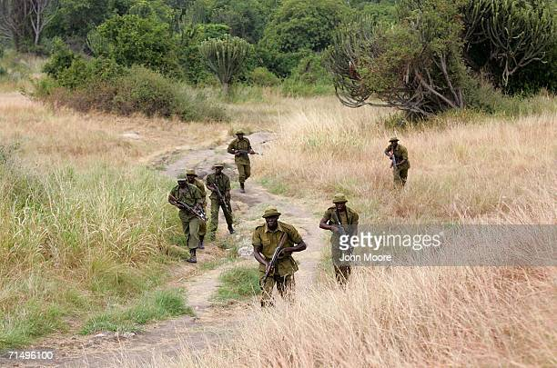Congolese park rangers conduct a combat patrol July 21, 2006 at Ishango in the Virunga National Park in eastern Democratic Republic of Congo. More...