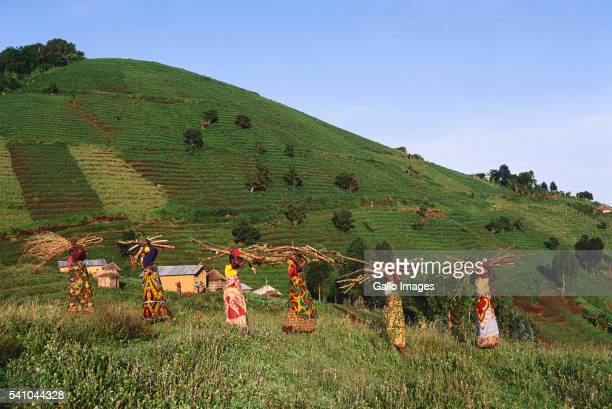 Congolese Women Gathering Firewood