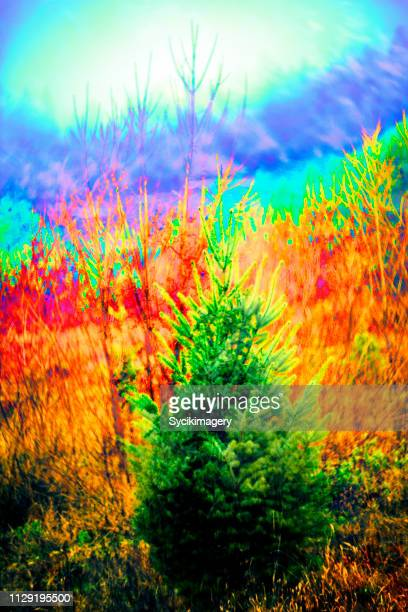 Conifer tree- psychedelic art