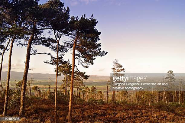 conifer woods in vee gap - gregoria gregoriou crowe fine art and creative photography. stock-fotos und bilder