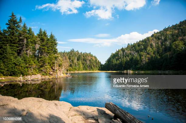 coniferous forest and lake - quebec stock pictures, royalty-free photos & images
