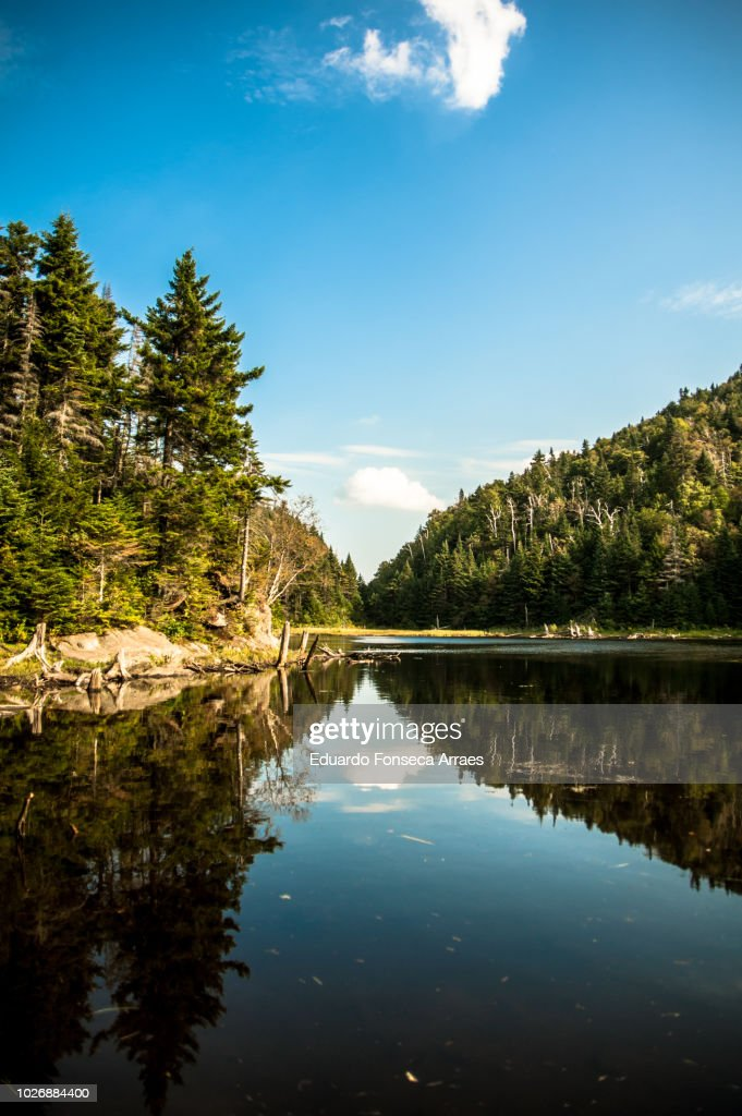 Coniferous Forest and Lake : Stock Photo