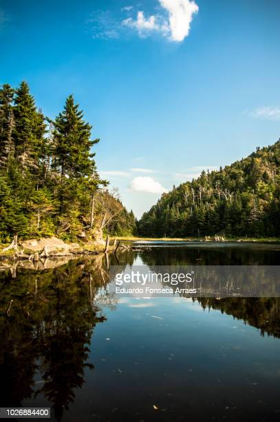 coniferous forest and lake - reflection lake stock photos and pictures