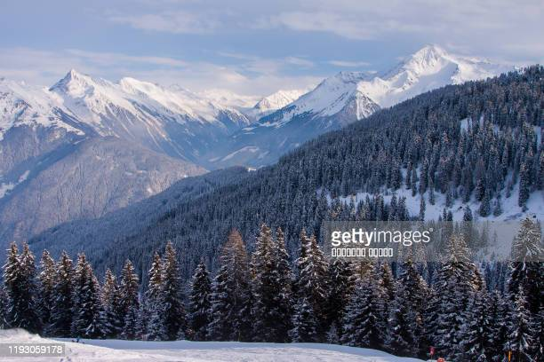 coniferous forest in zillertal arena ski resort. tyrol mayrhofen in austria in winter alps - alpine skiing stock pictures, royalty-free photos & images