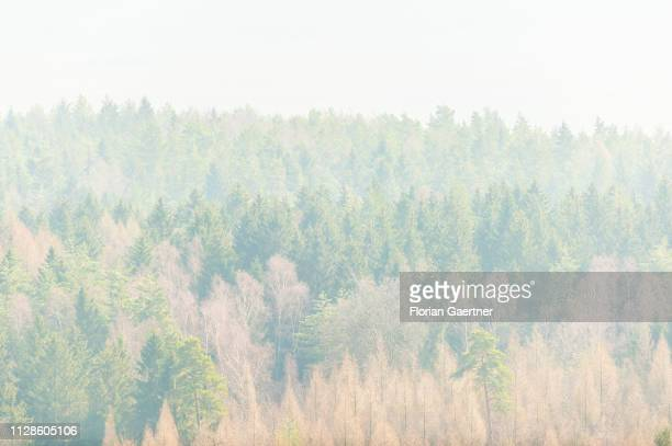 A coniferous forest is pictured on February 28 2019 in Pfaffendorf Germany