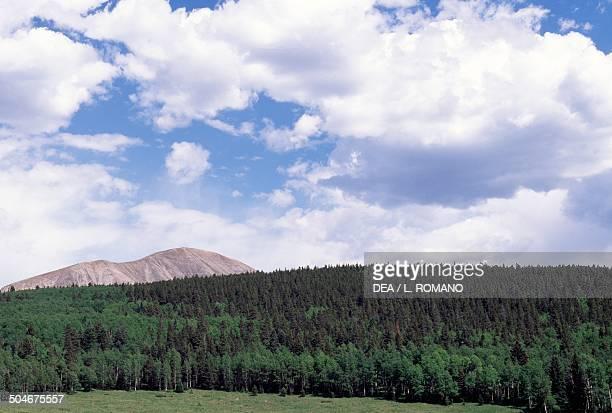 Coniferous forest Pueblo Colorado United States of America