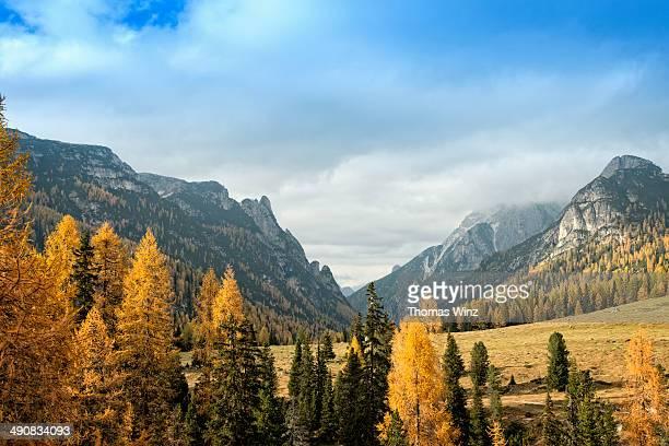 conifers and mountains in fall - conifera foto e immagini stock