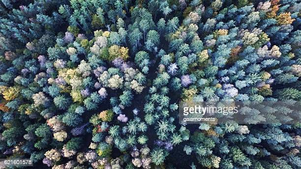 conifers - denmark stock pictures, royalty-free photos & images