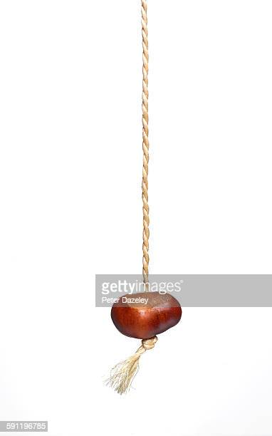 conker on white background with copy space - string stock pictures, royalty-free photos & images