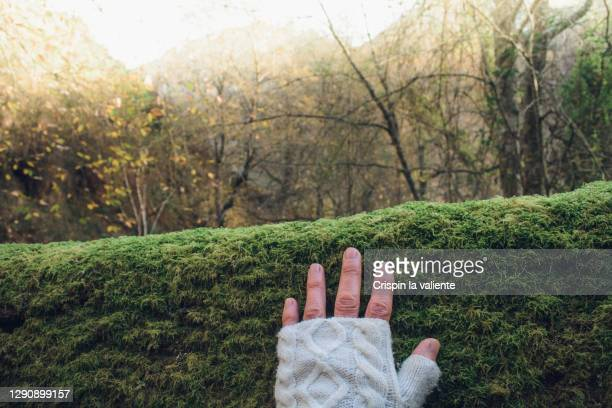 connection with nature - fingerless gloves stock pictures, royalty-free photos & images