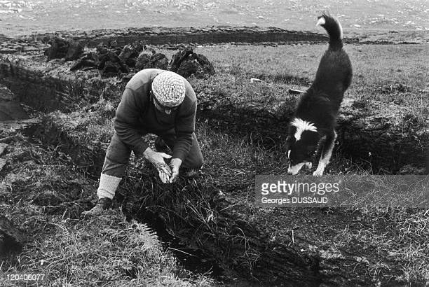 Connemara in Ireland in April 1981 Man collecting moorland accompanied by his dog