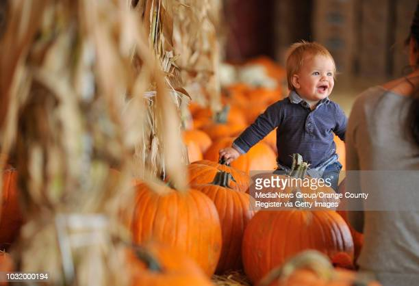 TORRANCE CALIF USA Conner Sutton 10 months is all smiles as he sits for a picture for his mother Jill Sutton at Cottone and Sons Pumpkin Patch in...
