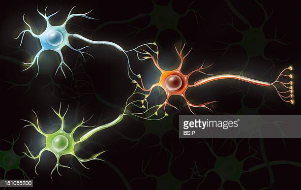 Connexion Of Neurons Representation Of Three Neurons Connected So As To Signify The Transmission