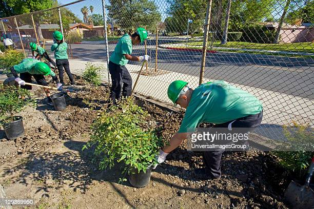 LA Conservation Corps helping with Tree Planting at Calvert Elementary School in Woodland Hills LA Conservation Corps provides job skills training...
