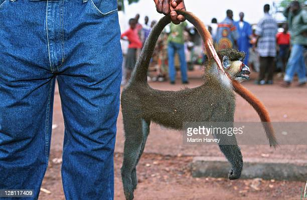 Conservation Issues. Bushmeat. Monkey for sale at market. Central Africa