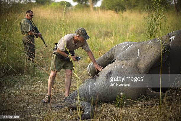 Conservationist Michael Fay inspects an elephant lying dead in the grasslands of Zakouma National Park under the shade of a tree after poachers fired...