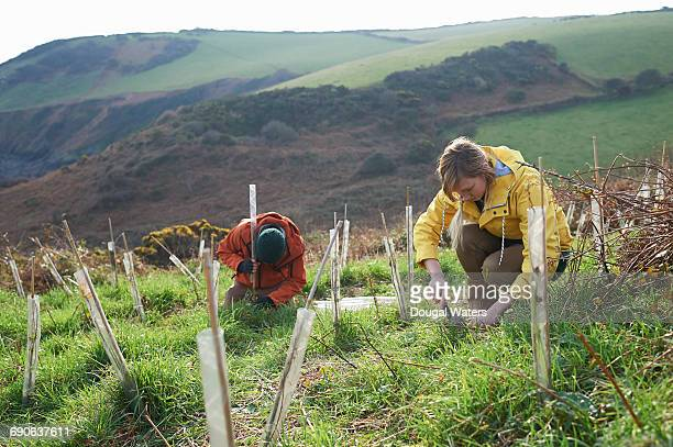 conservationists planting trees in countryside. - planting stock pictures, royalty-free photos & images