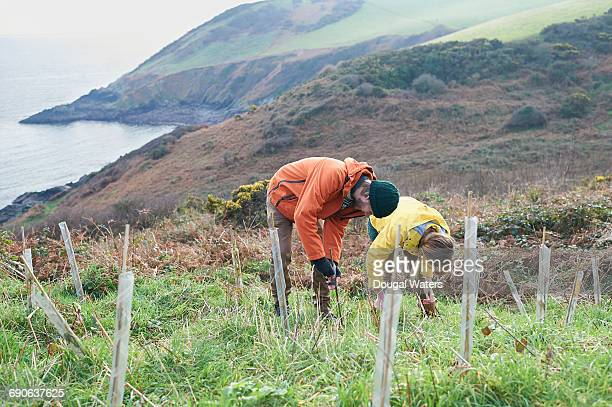 conservationists planting trees on coastline. - dougal waters stock pictures, royalty-free photos & images