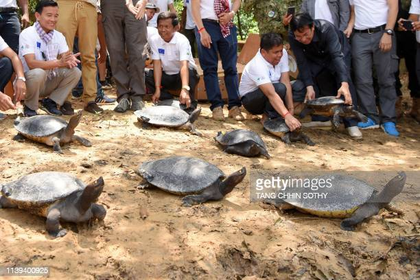 Conservationists release royal turtles into a river during a ceremony in Boeung Trach village Kampong Seila district in Preah Sihanouk province on...