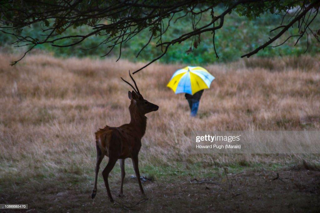 Conspicuous Camouflage, Richmond Park : Stock-Foto