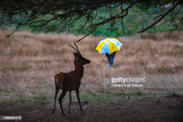 Conspicuous Camouflage, Richmond Park