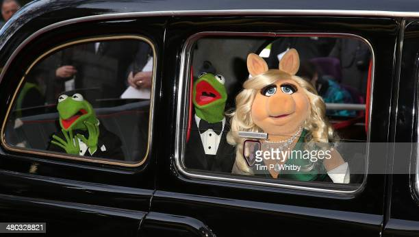Constantine Kermit The Frog and Miss Piggy attend the VIP screening of 'The Muppets Most Wanted' at The Curzon Mayfair on March 24 2014 in London...