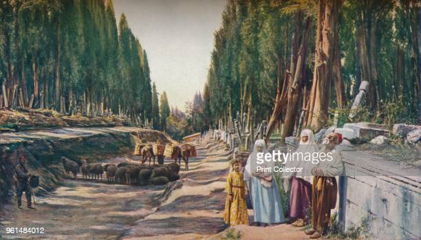 Constantinople. On a hill overlooking the Sea of Marmora the road to the quays of Scutari leads through the Biyuk Mezaristan, the largest of the...