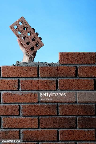 Construction worker behind wall, holding brick