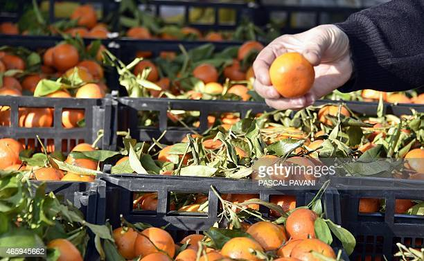A consumer chooses clementines in a market in the French southwestern town of Montauban on March 11 2015 PAVANI