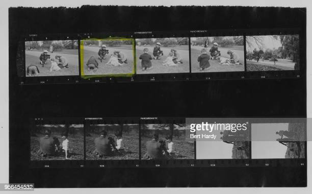 A contact sheet depicting actress Audrey Hepburn visiting Kew Gardens and walking a dog in Richmond Park west London May 1950 She is in London after...