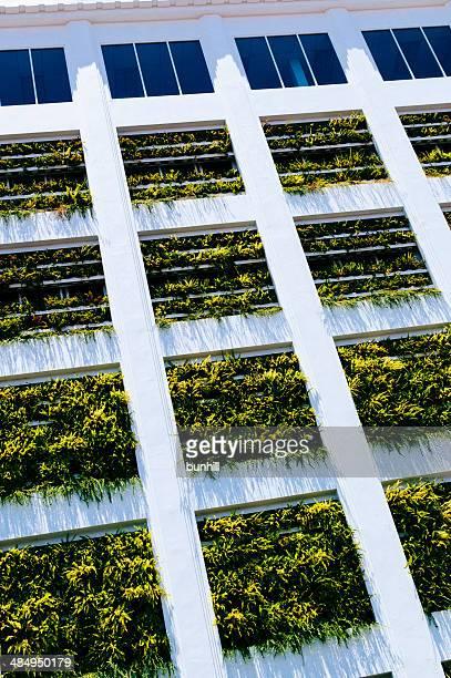 Contemporary architecture - vertical garden