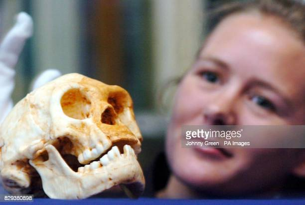 Content Developer at London's Science Museum Rebecca Richards looks across at a new species of human living on the Indonesian island of Flores as...