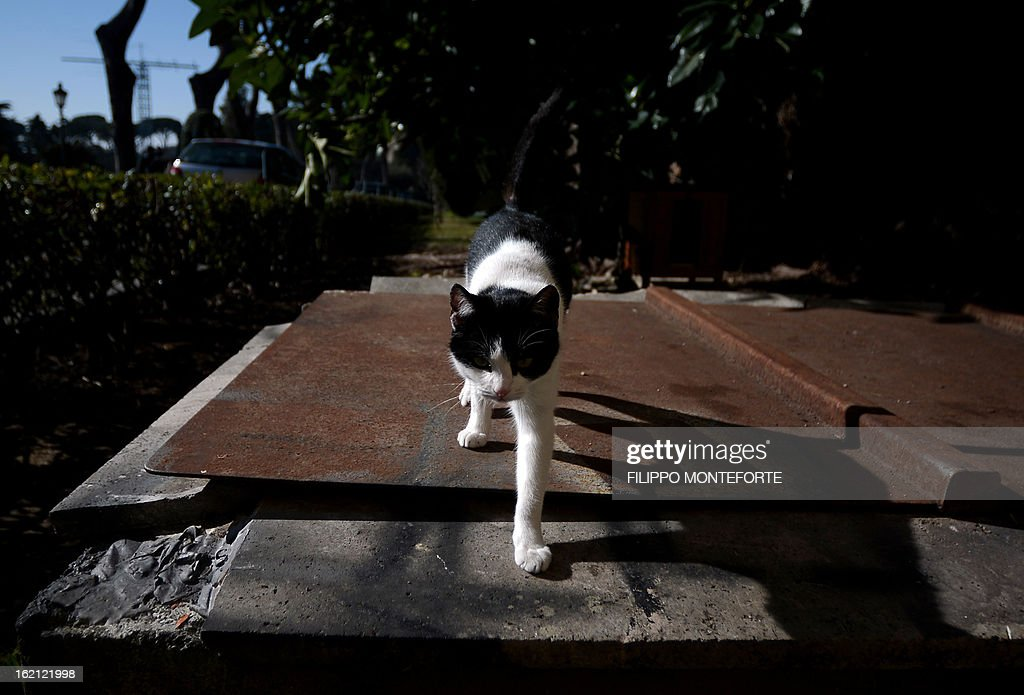 Contessina, one of Pope Benedict XVI's cats poses on February 19, 2013 for a photograph at the convent of Mater Ecclesiae (Mother of the Church)inside the Vatican City State
