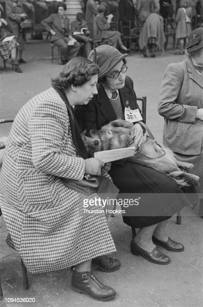 Contestant in Crufts dog show relaxes while its owners have a chat, at the Grand Hall, Olympia, London, 8th-9th February 1952. Original Publication:...