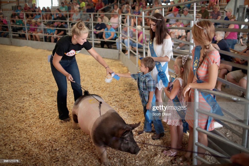 A contestant receives a blue ribbon after showing a hog during competition at the Iowa County Fair on July 13, 2018 in Marengo, Iowa. The fair, like many in counties throughout the Midwest, helps to nurture a new generation of farmers by teaching the fundamentals of quality livestock care and breeding. Farmers in Iowa and the rest of the country, who are already faced with decade-low profits, are bracing for the impact a trade war with China may have on their bottom line going forward.