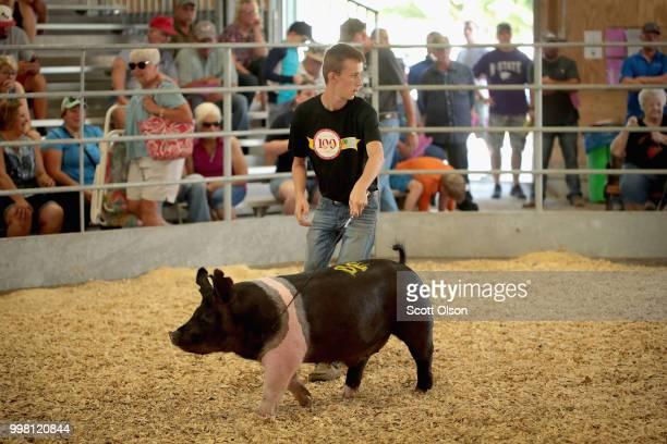 Contestant shows a hog during competition at the Iowa County Fair on July 13, 2018 in Marengo, Iowa. The fair, like many in counties throughout the...