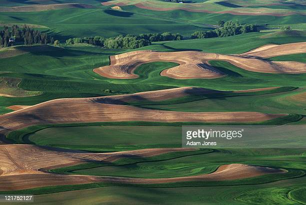 Contour farming in the Palouse region of eastern, Washington, USA
