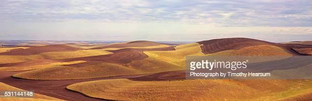 contour fields of wheat with sky beyond - timothy hearsum stockfoto's en -beelden