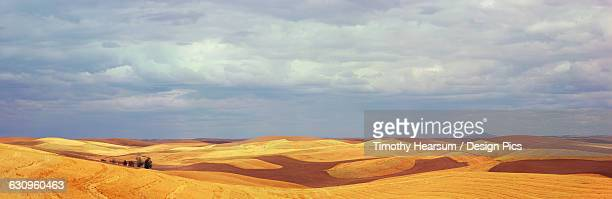 contour fields with stripes of ploughed earth and cut grain are shown with a stormy sky in the background - timothy hearsum stock pictures, royalty-free photos & images